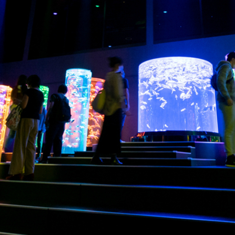 Cutting-Edge Lighting Systems from Martin by HARMAN Deliver Dazzling Displays at Art Aquarium